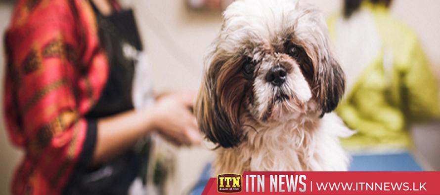 Tunisia's pooches get royal grooming at pet salon