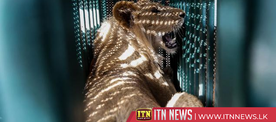 Gaza animals find new home following deaths at zoo
