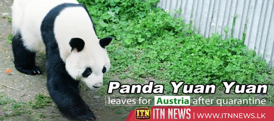 Giant panda Yuan Yuan set for 4-year research project in Austria