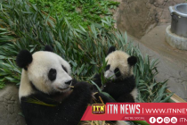 Two giant pandas leave for Russia for 15-year research cooperation