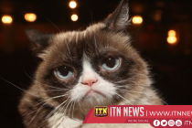 Grumpy Cat internet legend dies