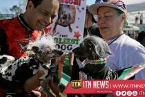 Dogs battle for top prize in annunal Ugly Dog Contest