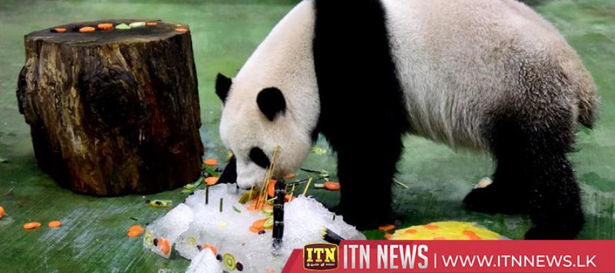 Giant Panda celebrates 6th birthday in Taipei