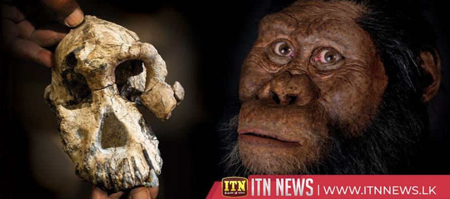 Fossil discovery reveals face of human ancestor