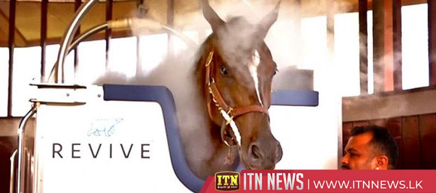 Race horses get cold treatment to boost performance