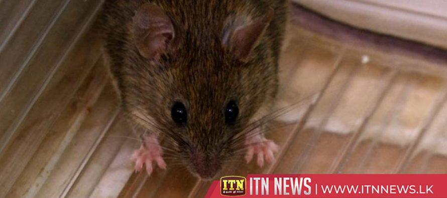 Liquid aspirin is shrinking brain tumours in mice
