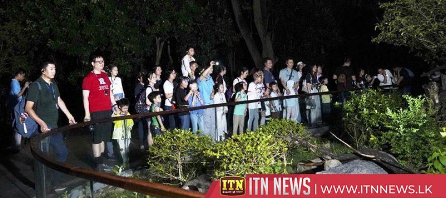 Shanghai zoo offers nighttime tours