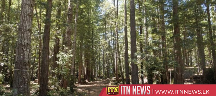 California redwood forest latest alternative burial site