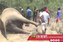 No facts revealed to indicate that the elephant deaths had been caused due to poisoning