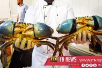 Crab City Project launched in Tangalle