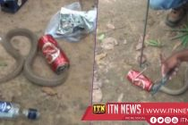 Anyone ordered a cobra beer? Snake freed from can in India