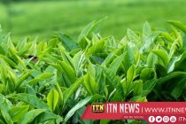 High demand for Low Country tea