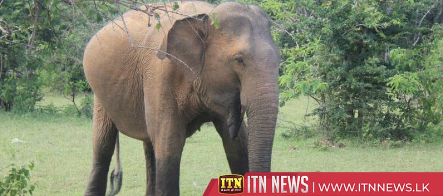 A six year old girl and her grandmother killed in a wild elephant attack