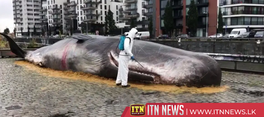 Fake beached whale confuses Brussels locals