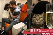Businesses stand with overweight cat owner after Aeroflot penalty