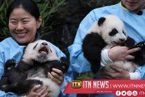 Baby pandas named and introduced to Chinese ambassador at Belgian zoo