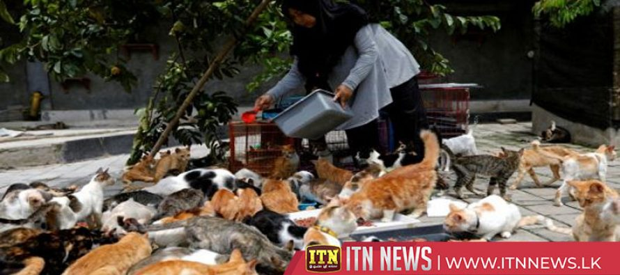 PURR-ty for over 250 cats living in Indonesian shelter