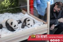 Berlin's twin panda newborns receive names