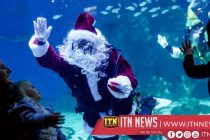 Dasher, Dancer, Prancer and Jaws! Santa swims with sharks in Rio aquarium