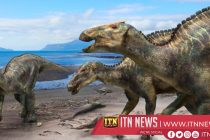 Argentine scientists discover new dinosaur species
