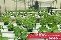 A backyard hydroponic farm beats Zimbabwean drought to grow veg