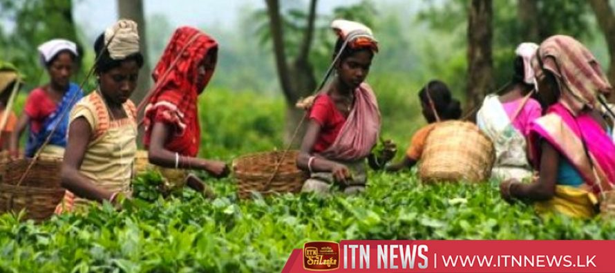 Daily minimum wage of plantation workers to be raised to 1000 rupees