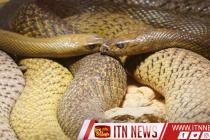 இந்தியாவில் வருடமொன்றுக்கு பாம்பு தீண்டலினால் 12 இலட்சம் பேர் மரணம்