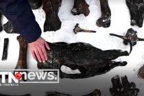 Russian divers hunt for ancient bones in frozen river