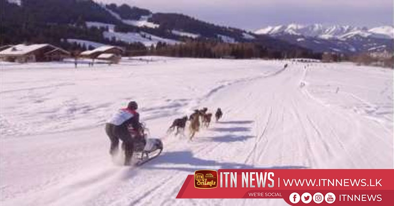 Dog sled challenge races through snowy French Alps