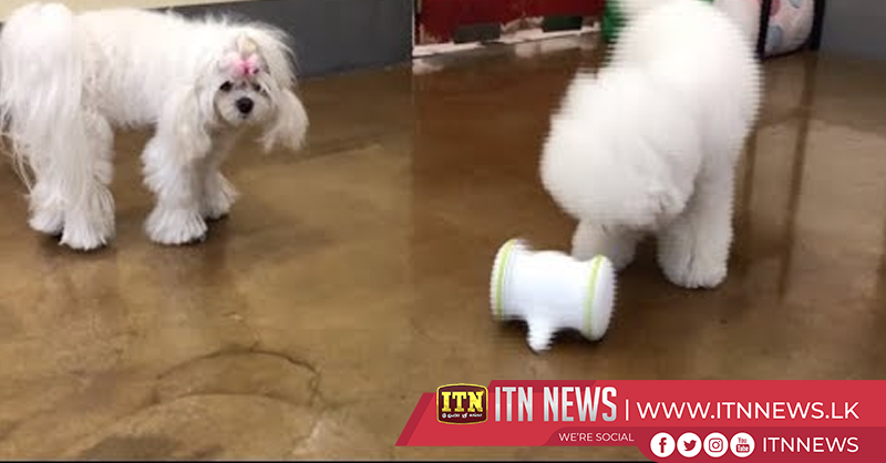Pet-pleasing robot keeps tails wagging at CES