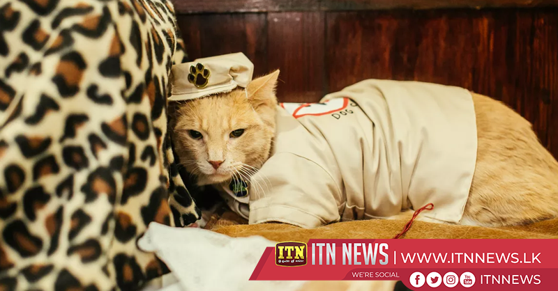'Mewdels' take to the catwalk for charity cat fashion show