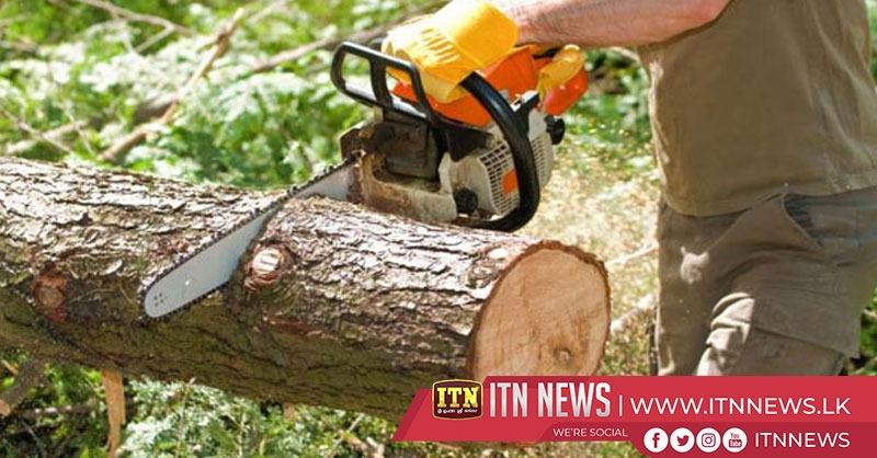 Importation of chainsaws banned