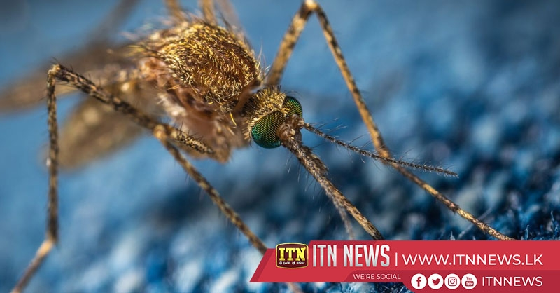 Scientists take aim at malarial mosquitoes with spider toxin