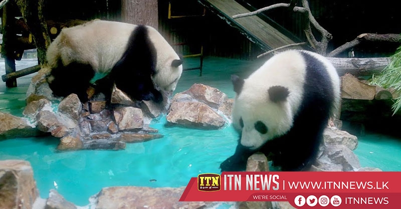 Month-old panda cub in good health in northwest China