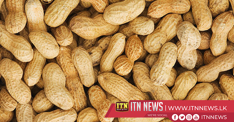Farmers get a high yield of Peanuts