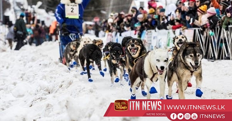 36th John Beargrease Sled Dog Marathon gets underway