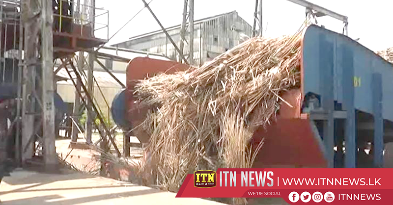 Cane crushing season at Hingurana begins